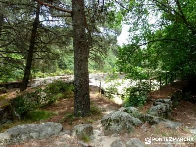 Pinares de la Angostura en Piedralaves;ruta por la pedriza rutas madrid sierra